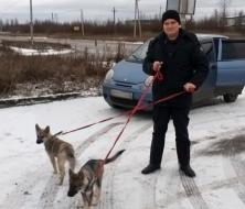 В Великом Новгороде приставы спасли щенков хаски