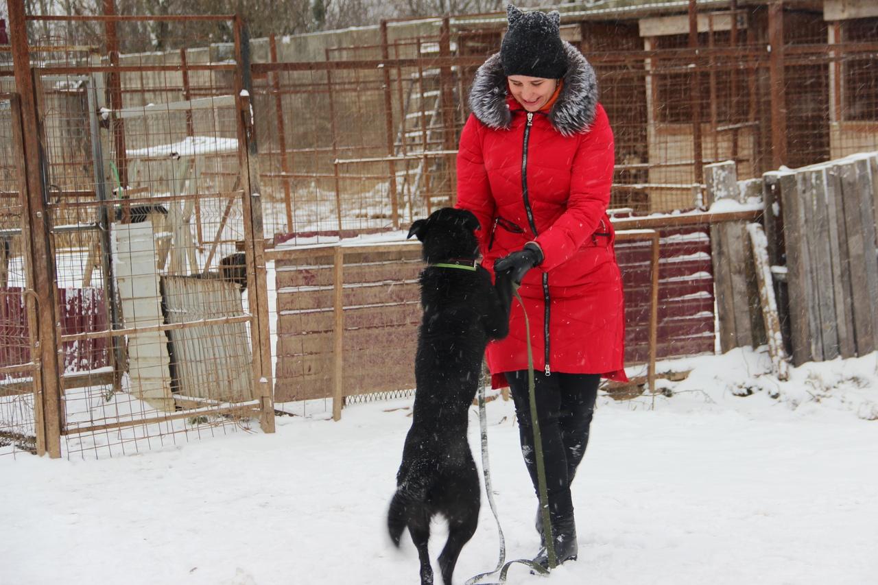 Новгородские зоозащитники приглашают на благотворительные прогулки
